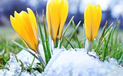 Konkurs Oznaki Wiosny
